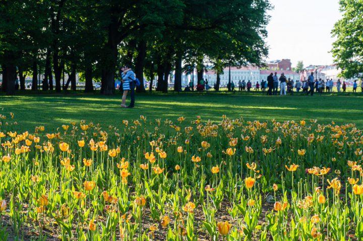 Aleksanterin puisto, Pietarin keskusta